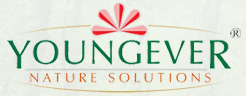 youngever logo