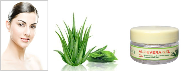 Ayurvedam Telugu Magazine Aloe Vera For Health And Beauty
